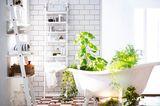 Schlafzimmerpflanzen pflegen - Bild 11