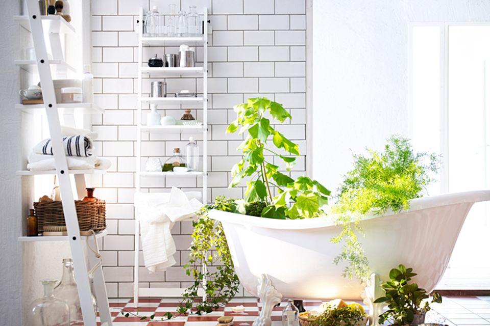 Schlafzimmerpflanzen pflegen