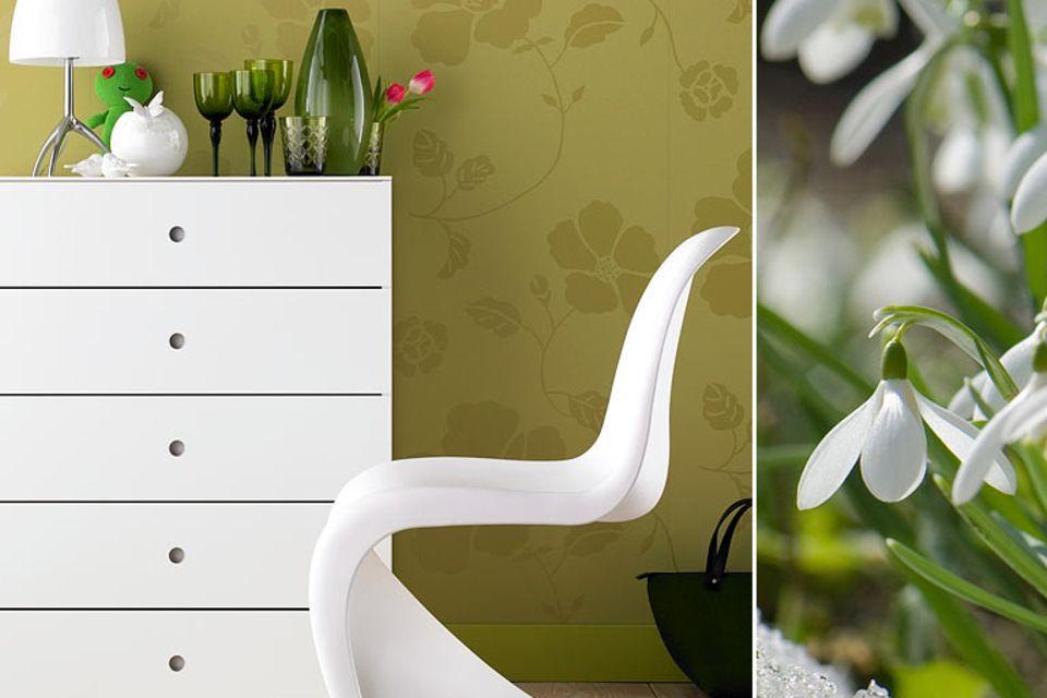 Schneeglöckchen: Weiß mit frischem Grün
