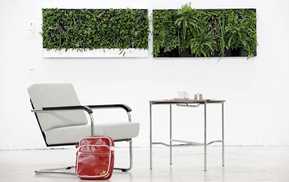 Grüne Kunst: Ein Wandgarten ersetzt auch Bilder.