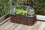 Der Balkon wird zum Gemüsegarten