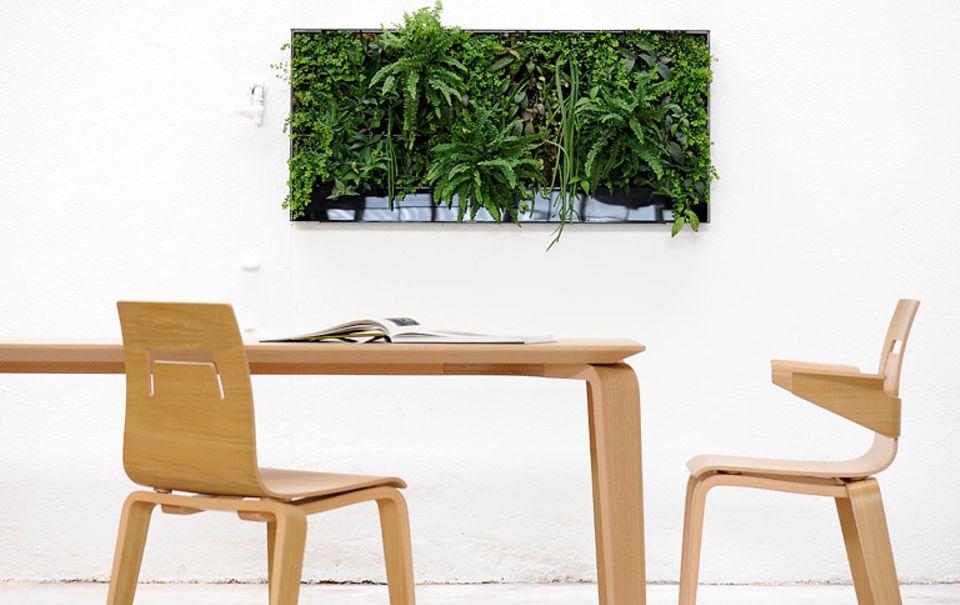 Einfach aufgehängt: grüner Wandgarten von verticalis.ch