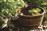 Ein Mini-Teich für die Terrasse