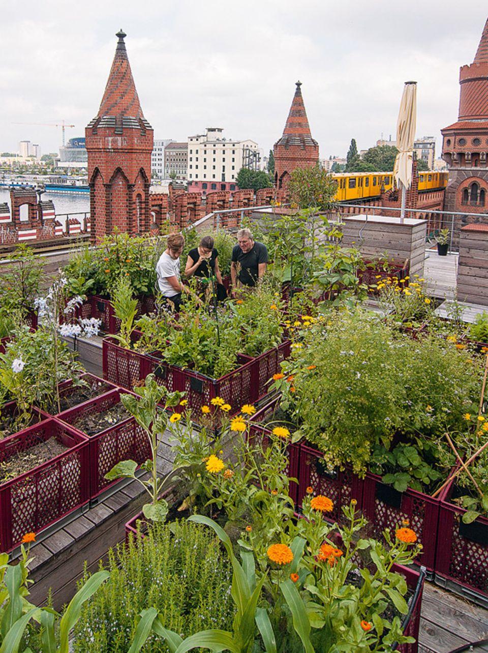 Privater Gemeinschaftsgarten und Urban Gardening-Projekt über den Dächern von Berlin