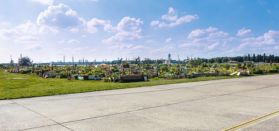 Allmende-Kontor: Wo einst Flieger zur Landung in Berlin Tempelhof ansetzten, wachsen heute diverse Gemüse.