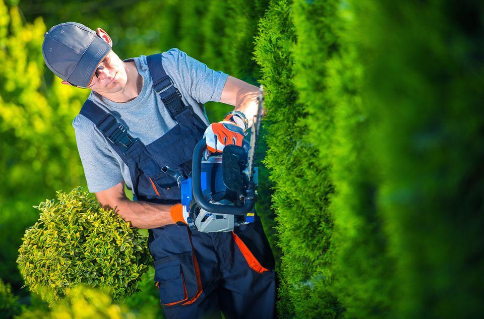 Gärtner schneidet einen Busch mit einer elektrischen Heckenschere
