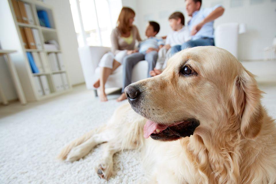 Selbstauskunft: Familie mit Hund in der Wohnung