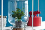 Selbst Pflanzen können mimimalistische Deko sein