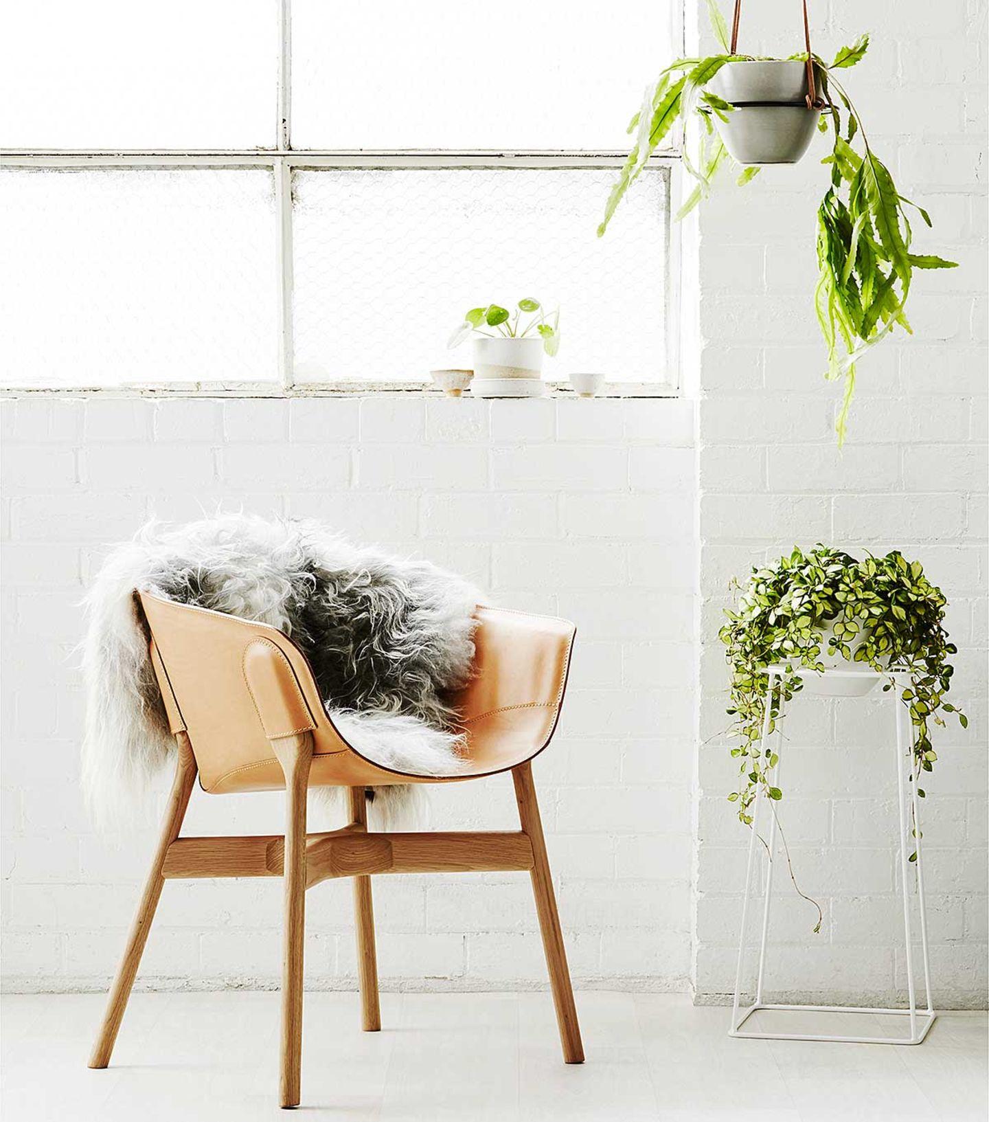 Wohnen mit Zimmerpflanzen, Pflanzgefäße von Ivy Muse