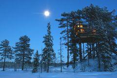 "Baumhaushotel ""Tree Top Hut"" in Norwegen"