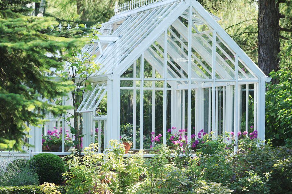 Viktorianisches Gewächshaus im Garten