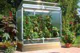 Tomatenhaus mit erntereifen Früchten
