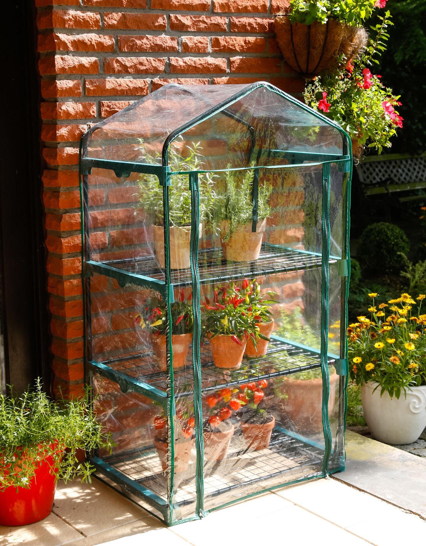 Anzuchthaus für Pflanzen auf der Terrasse