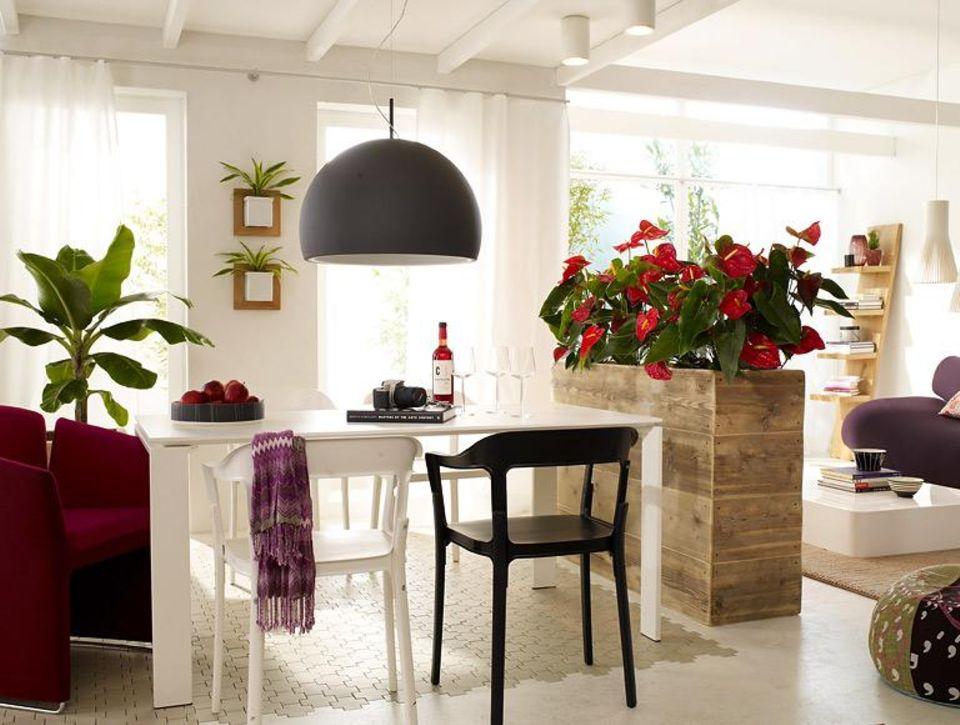 Zimmerpflanzen als Raumteiler