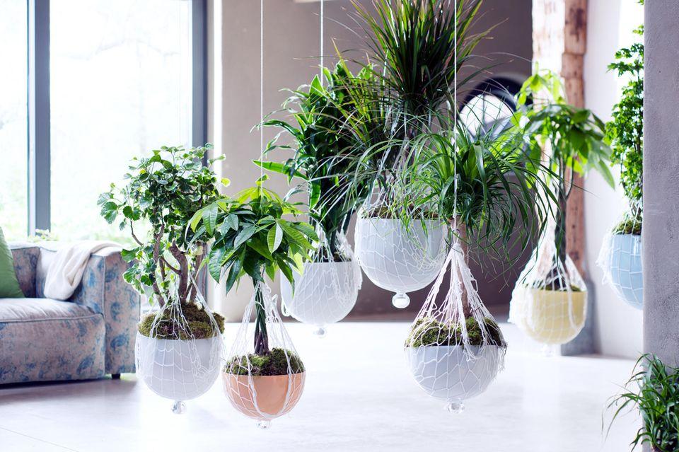 Zimmerpflanzen in Hängetöpfen