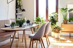 Geliebtes Grünzeug: Den passenden Platz im Wohnzimmer finden