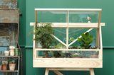Geliebtes Grünzeug: Pflanzen im Mini-Gewächshaus