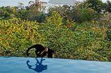 Costa Rica: Hangvilla auf Stahlstelzen - Infinity Pool