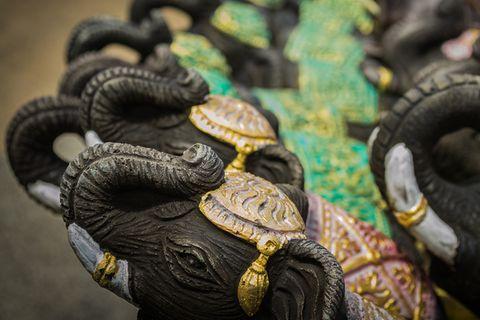 Hausdoktor Elefanten