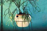 Anspruchslose Pflanzen kaufen - Bild 5