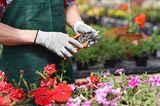 Gartengeräte und was sie können - die Gartenschere