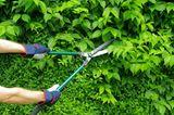 Gartengeräte und was sie können - die Heckenschere