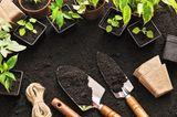 Gartengeräte und was sie können - kleine Schaufel