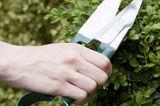 Gartengeräte und was sie können - die Buchsbaumschere