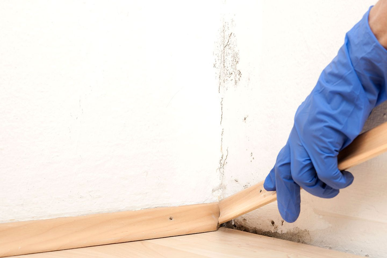 Ecke mit Schimmel an der Wand, an der die Fußleiste entfernt wird