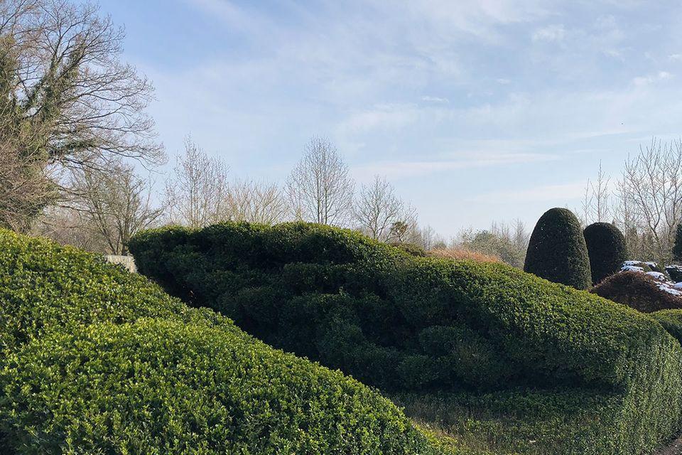 Buchsbaumhecke im Garten