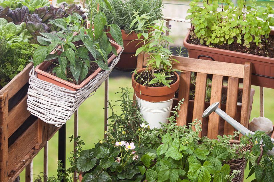 Kleiner Kräutergarten auf dem Balkon
