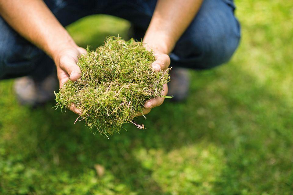 Moos aus dem Rasen