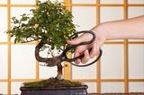 Bonsai beschneiden