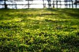 Moosentferner für den Rasen