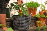Drahtkorb vom schwedischen Hersteller Korbo für den Garten