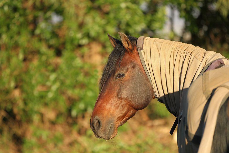 Pferd mit Insektenschutzdecke