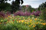 Taglilien im Falkenrehder Garten