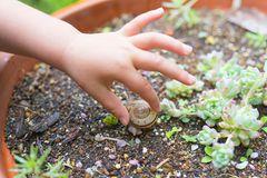 Schnecke im Blumentopf