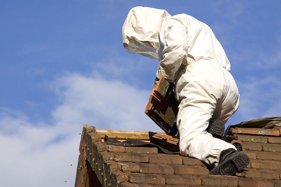 Wespennest entfernen: Kammerjäger auf dem Dach