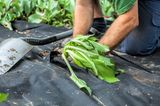 Unkrautfolie bepflanzen