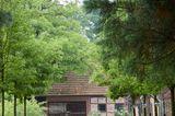 Mammutbäume vor dem Eingangstor