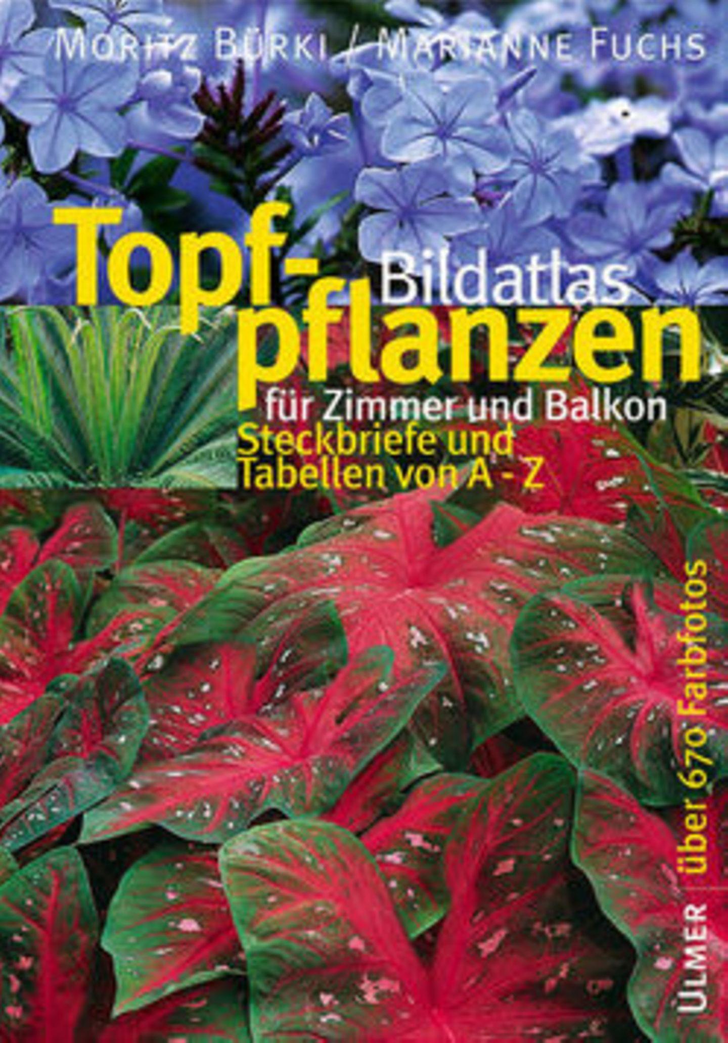 Topfpflanzen Bildatals