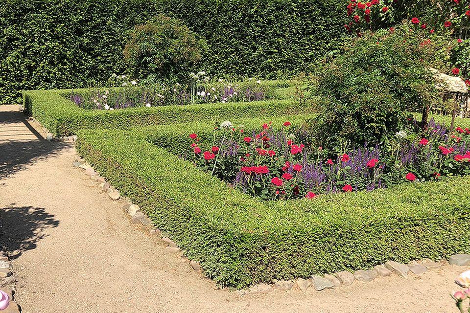 Buchsbaum (Buxus sempervirens) Hecke