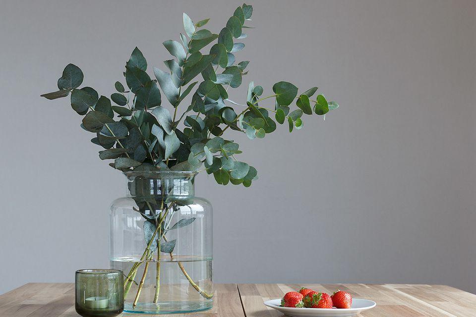 Eukalyptus (Eucalyptus spec.) als Strauß