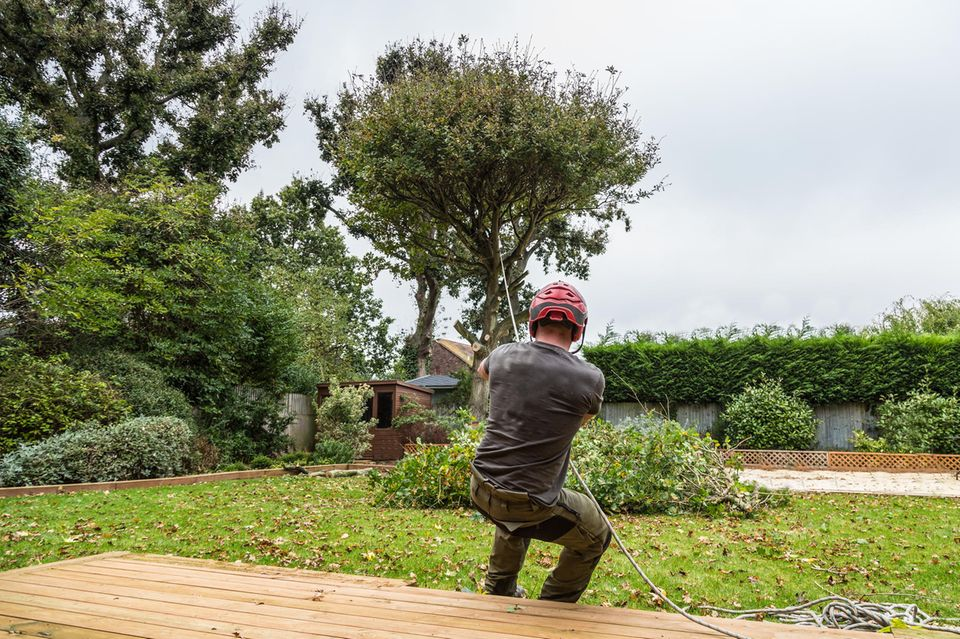 Baum fällen - per Seil die Fallrichtung beeinflussen