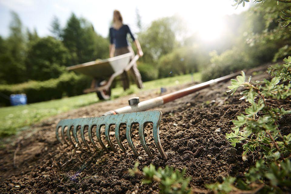 Rasen säen: den Boden vorbereiten