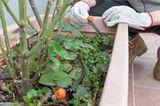 Blumen und Pflanzen bewässern im Urlaub: Blumenkasten mit Wassertank