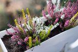 Blumen und Pflanzen bewässern im Urlaub: Wasserspeichermatte