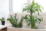 Blumen und Pflanzen im Urlaub bewässern: Zimmerpflanzen in der Badewanne