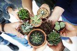 Blumen und Pflanzen im Urlaub bewässern: Freunde und Familie als Pflanzensitter